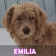 Les adultes de taille moyenne en Roumanie en un clin d'oeil Emilia10