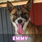 Les adultes de taille moyenne en Roumanie en un clin d'oeil Emmy15