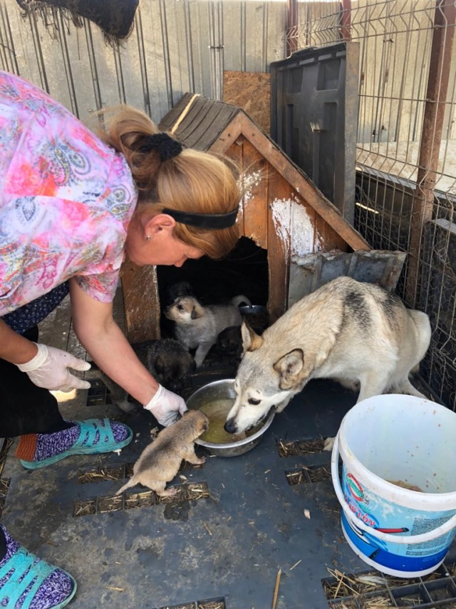 LOUVIA (ex EUROPA) - mère courageuse sauvée de la mort - Taille moyenne - née environ en janvier 2014 - Chez Carmina à Bucarest - Adoptée par Amelle (42) Europa11