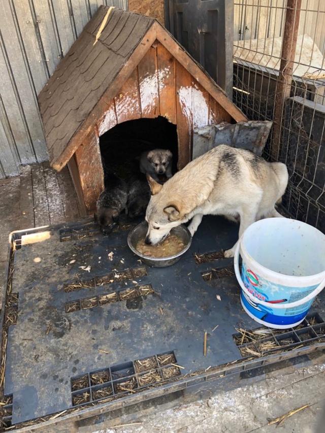 LOUVIA (ex EUROPA) - mère courageuse sauvée de la mort - Taille moyenne - née environ en janvier 2014 - Chez Carmina à Bucarest - Adoptée par Amelle (42) Europa12