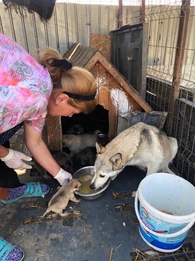 LOUVIA (ex EUROPA) - mère courageuse sauvée de la mort - Taille moyenne - née environ en janvier 2014 - Chez Carmina à Bucarest - Adoptée par Amelle (42) Europa13
