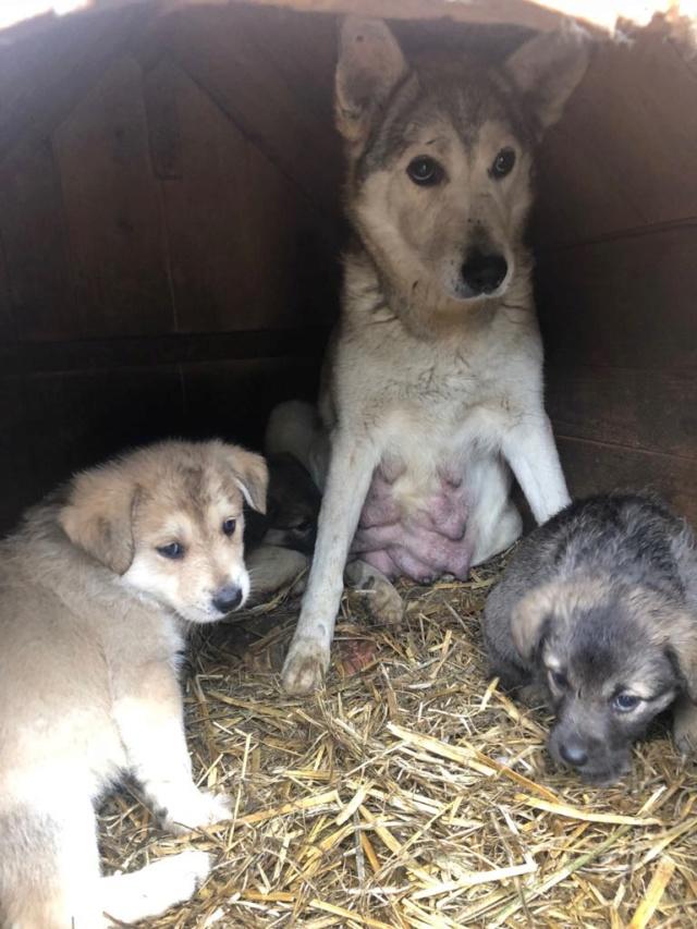 EUROPA - Magnifique femelle - mère courageuse sauvée de la mort - Taille moyenne - née environ en 2014 - Chez Carmina à Bucarest Europa14