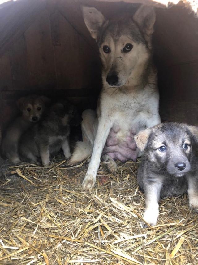 EUROPA - Magnifique femelle - mère courageuse sauvée de la mort - Taille moyenne - née environ en 2014 - Chez Carmina à Bucarest Europa16