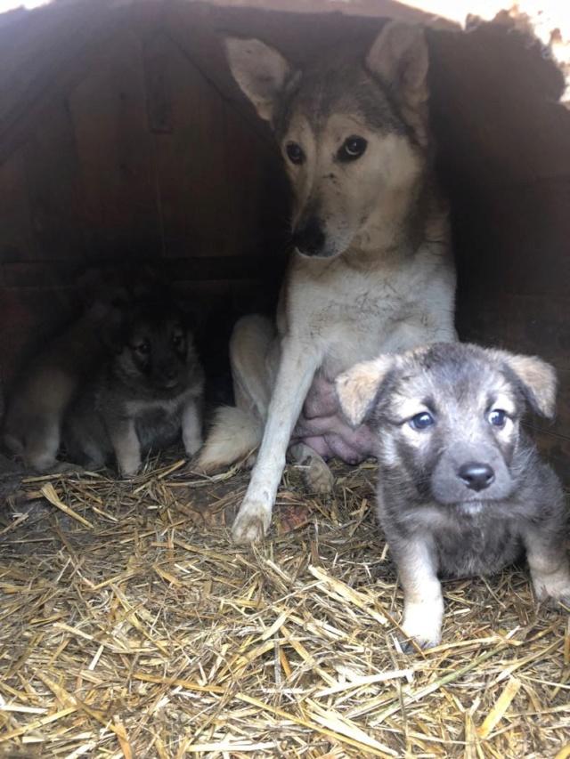 LOUVIA (ex EUROPA) - mère courageuse sauvée de la mort - Taille moyenne - née environ en janvier 2014 - Chez Carmina à Bucarest - Adoptée par Amelle (42) Europa18