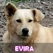 Les adultes de taille moyenne en Roumanie en un clin d'oeil Evira14