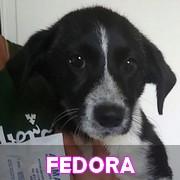 Les chiots en roumanie en un clin d'oeil  Fedora17
