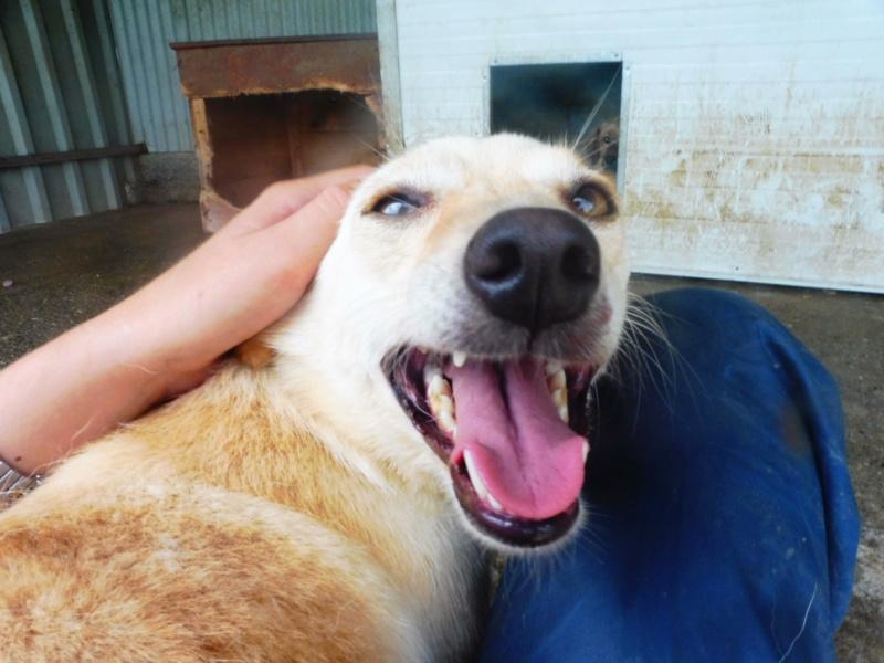 FEELING - femelle croisée labrador taille petite à moyenne née environ avril 2015 - REMEMBER ME LAND - Adoptée par Magali (68) - Page 2 Feelin17