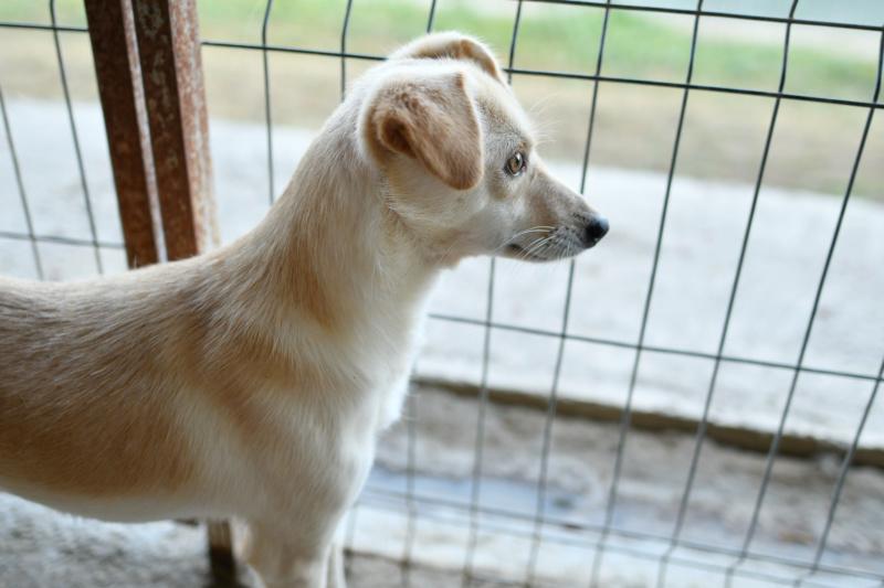 FEELING - femelle croisée labrador taille petite à moyenne née environ avril 2015 - REMEMBER ME LAND - Adoptée par Magali (68) - Page 3 Feelin29