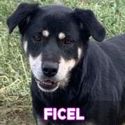 Les adultes de taille moyenne en Roumanie en un clin d'oeil Ficel13