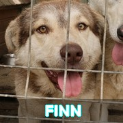 Les adultes de taille moyenne en Roumanie en un clin d'oeil Finn11