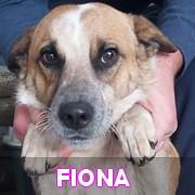Les adultes de taille moyenne en Roumanie en un clin d'oeil Fiona11