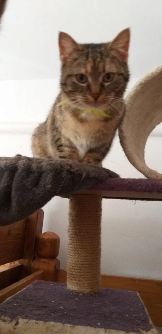 FLORICICA -URGENCE  très jolie chat femelle, née en 2015/2016. Adorable. ADOPTEE EN ROUMANIE Floric14