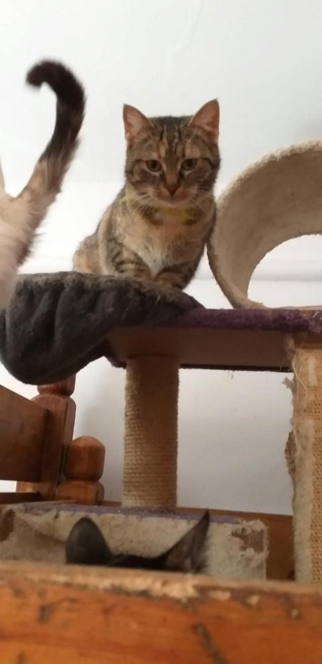 FLORICICA -URGENCE  très jolie chat femelle, née en 2015/2016. Adorable. ADOPTEE EN ROUMANIE Floric15
