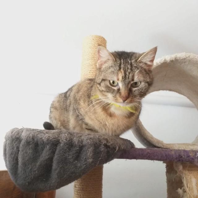 FLORICICA -URGENCE  très jolie chat femelle, née en 2015/2016. Adorable. ADOPTEE EN ROUMANIE Floric16