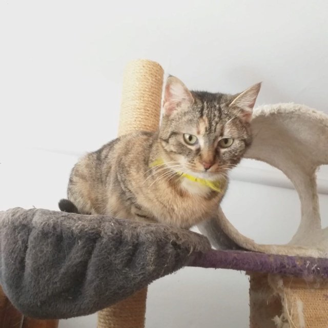 FLORICICA -URGENCE  très jolie chat femelle, née en 2015/2016. Adorable. ADOPTEE EN ROUMANIE Floric17