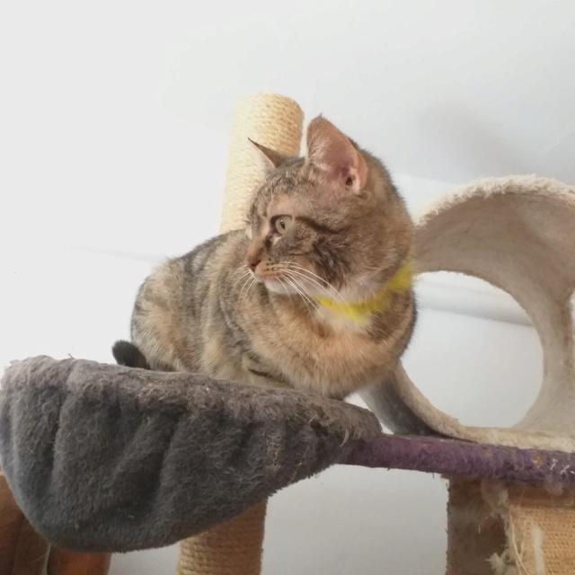 FLORICICA -URGENCE  très jolie chat femelle, née en 2015/2016. Adorable. ADOPTEE EN ROUMANIE Floric18