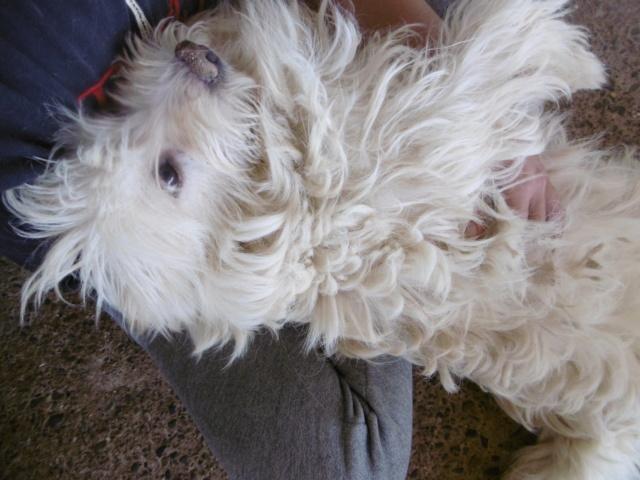 FLUFFY - mâle croisé de taille petite, né environ en 2014 (PASCANI) - REMEMBER ME LAND Fluffy32