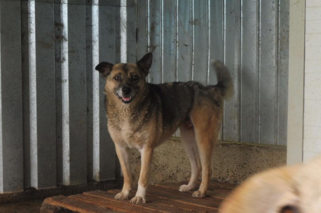 FROZEN - mâle croisé berger allemand de taille moyenne, maltraité, né en 2010 (PASCANI) - REMEMBER ME LAND - DECEDE Frozen13