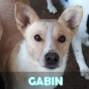 Association Remember Me France : sauver et adopter un chien roumain Gabin11