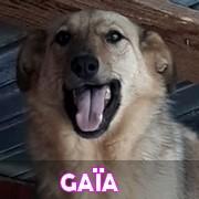 Les adultes de taille moyenne en Roumanie en un clin d'oeil Gaia13