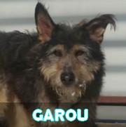 Association Remember Me France : sauver et adopter un chien roumain Garou17