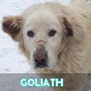 Les adultes de grande taille en Roumanie en un clin d'oeil Goliat26