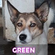 Association Remember Me France : sauver et adopter un chien roumain Green11