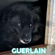 Association Remember Me France : sauver et adopter un chien roumain Guerla21