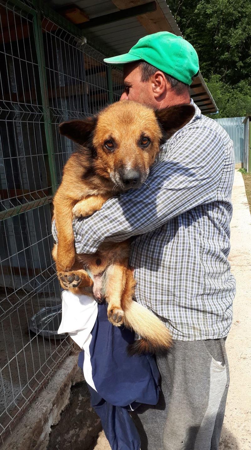 URGENCE PAPY GUIZMO - mâle croisé de taille petite à moyenne, né environ en septembre 2008. (PASCANI) - REMEMBER ME LAND - Adopté par Camille (57) DECEDE Guizmo12