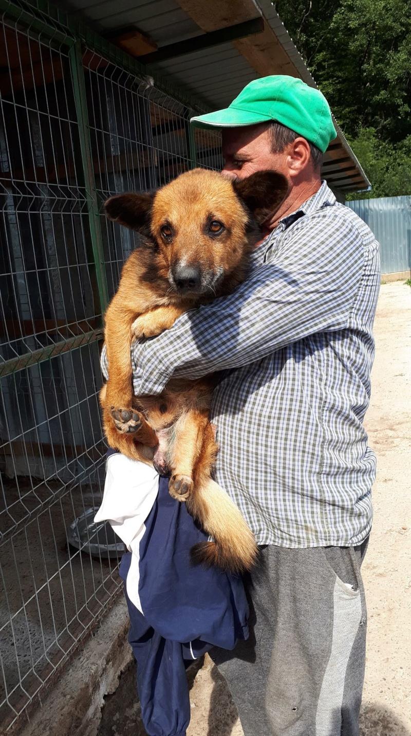 URGENCE PAPY GUIZMO - mâle croisé de taille petite à moyenne, né environ en septembre 2008. (PASCANI) - REMEMBER ME LAND - Adopté par Camille (57) DECEDE Guizmo13