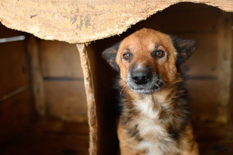 URGENCE PAPY GUIZMO - mâle croisé de taille petite à moyenne, né environ en septembre 2008. (PASCANI) - REMEMBER ME LAND - Adopté par Camille (57) DECEDE Guizmo17