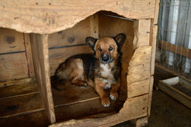 URGENCE PAPY GUIZMO - mâle croisé de taille petite à moyenne, né environ en septembre 2008. (PASCANI) - REMEMBER ME LAND - Adopté par Camille (57) DECEDE Guizmo18