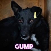 Association Remember Me France : sauver et adopter un chien roumain Gump11