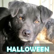 Association Remember Me France : sauver et adopter un chien roumain Hallow56