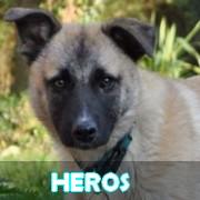 Association Remember Me France : sauver et adopter un chien roumain Heros13