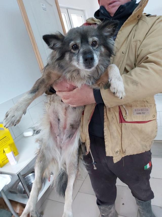 HOPE - femelle, de taille moyenne, née environ en mi mars 2011 (GOLESTI) - REMEMBER ME LAND - Adoptée par Bélinda (Suisse) Hope410