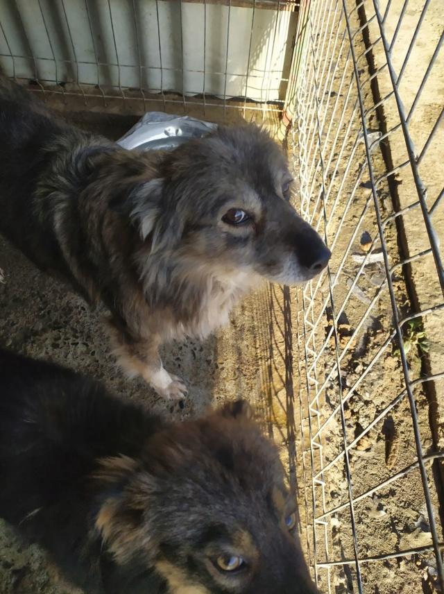HOPE - femelle, de taille moyenne, née environ en mi mars 2011 (GOLESTI) - REMEMBER ME LAND - Adoptée par Bélinda (Suisse) Hope610