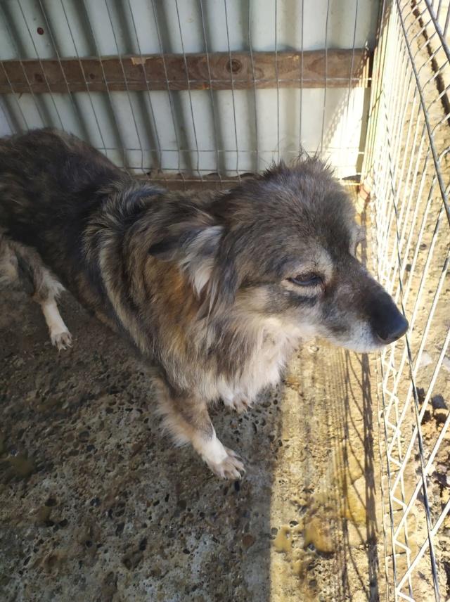 HOPE - femelle, de taille moyenne, née environ en mi mars 2011 (GOLESTI) - REMEMBER ME LAND - Adoptée par Bélinda (Suisse) Hope710