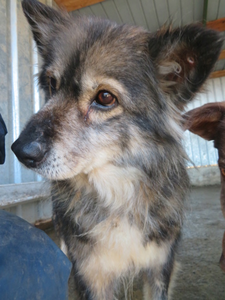 HOPE - femelle, de taille moyenne, née environ en mi mars 2011 (GOLESTI) - REMEMBER ME LAND - Adoptée par Bélinda (Suisse) Hope_610