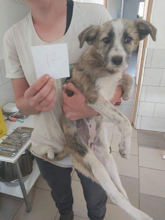 IBIZA - Chiot femelle - taille moyenne à l'âge adulte - Née mi mai 2019 - REMEMBER ME LAND - PASCANI Ibiza310