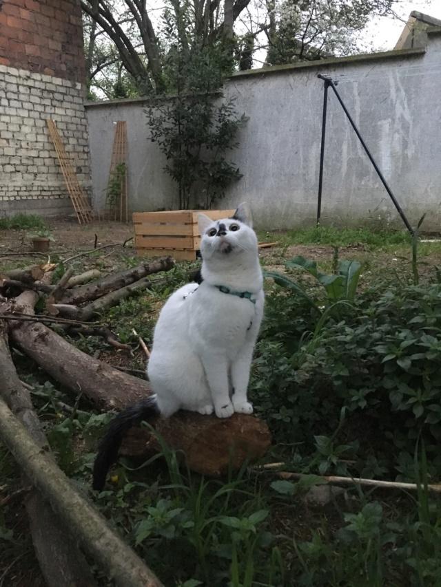 INAYA - chaton femelle, née environ mi novembre 2017 - en FA chez Abysse (92) - ADOPTEE PAR LESLIE et JULIEN (94)  Inaya115