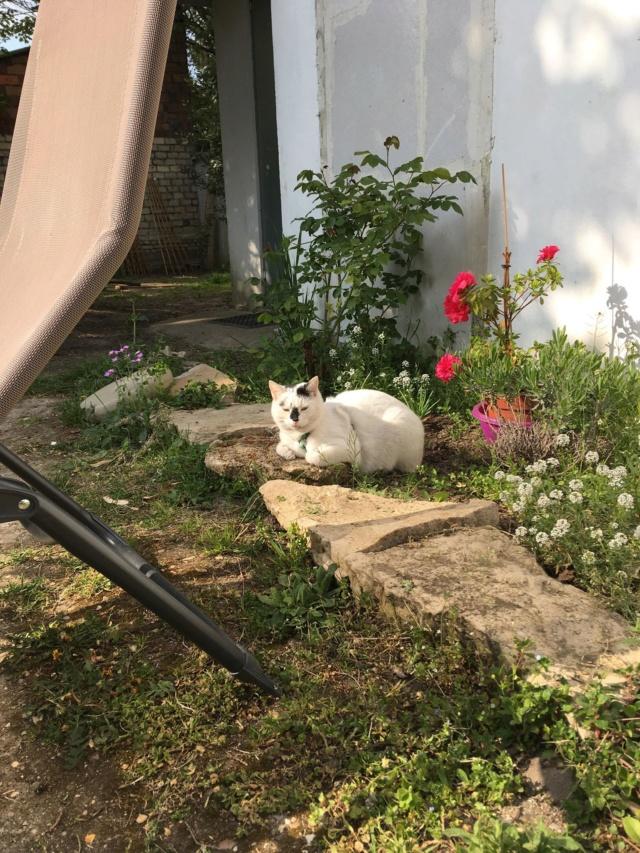 INAYA - chaton femelle, née environ mi novembre 2017 - en FA chez Abysse (92) - ADOPTEE PAR LESLIE et JULIEN (94)  Inaya15