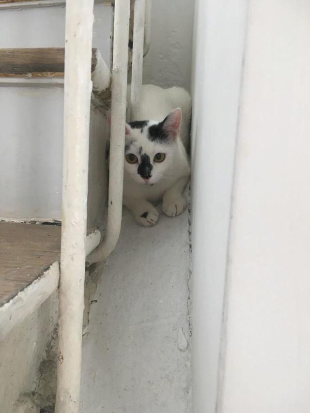 INAYA - chaton femelle, née environ mi novembre 2017 - en FA chez Abysse (92) - ADOPTEE PAR LESLIE et JULIEN (94)  Inaya212