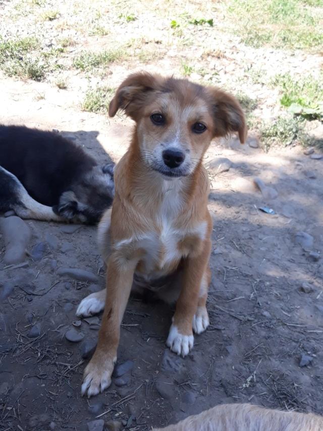 INECA (ex INCA) - femelle, de taille moyenne adulte, née en avril 2018 (PASCANI) - REMEMBER ME LAND - ADOPTEE PAR ALYSSIA (54) Inca11