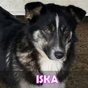 Les adultes de petite taille en Roumanie en un clin d'oeil Iska13