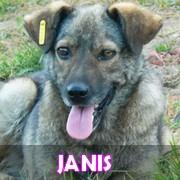Les adultes de taille moyenne en Roumanie en un clin d'oeil Janis10