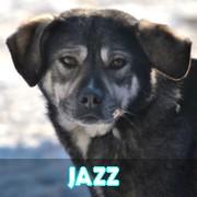 Association Remember Me France : sauver et adopter un chien roumain Jazz11