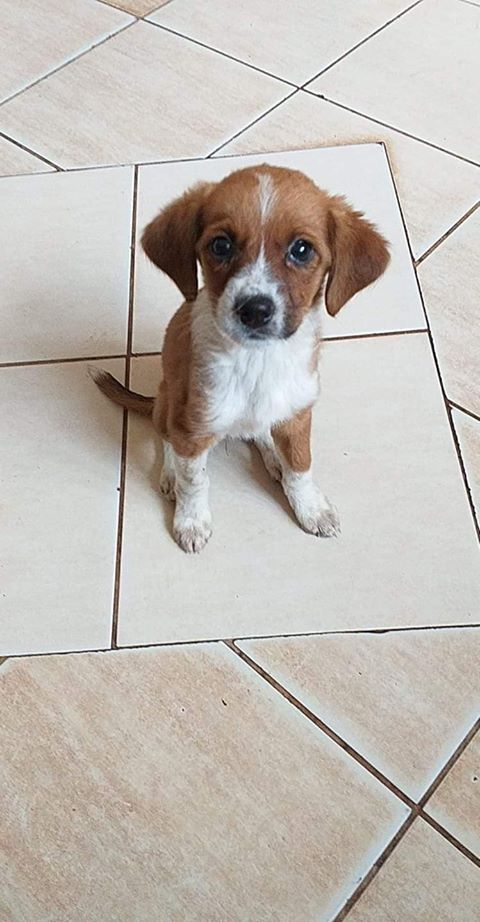 JUICY - Chiot femelle - taille petite à moyenne à l'âge adulte - Née en avril 2019 - REMEMBER ME LAND - PASCANI- réservée adoption par Julien (31) - Décédée  Juicy12