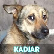 Les adultes de taille moyenne en Roumanie en un clin d'oeil Kadjar10