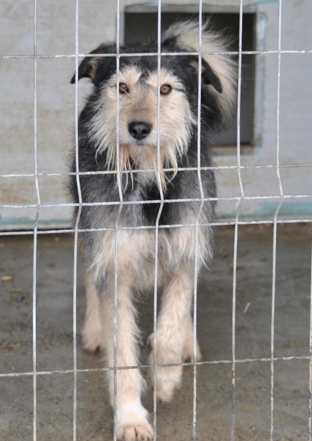 KAYLA - x griffon 3 ans (3 ans de refuge)  Asso Remember Me (Roumanie) Kayla10
